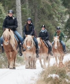 guided trail ride through forest
